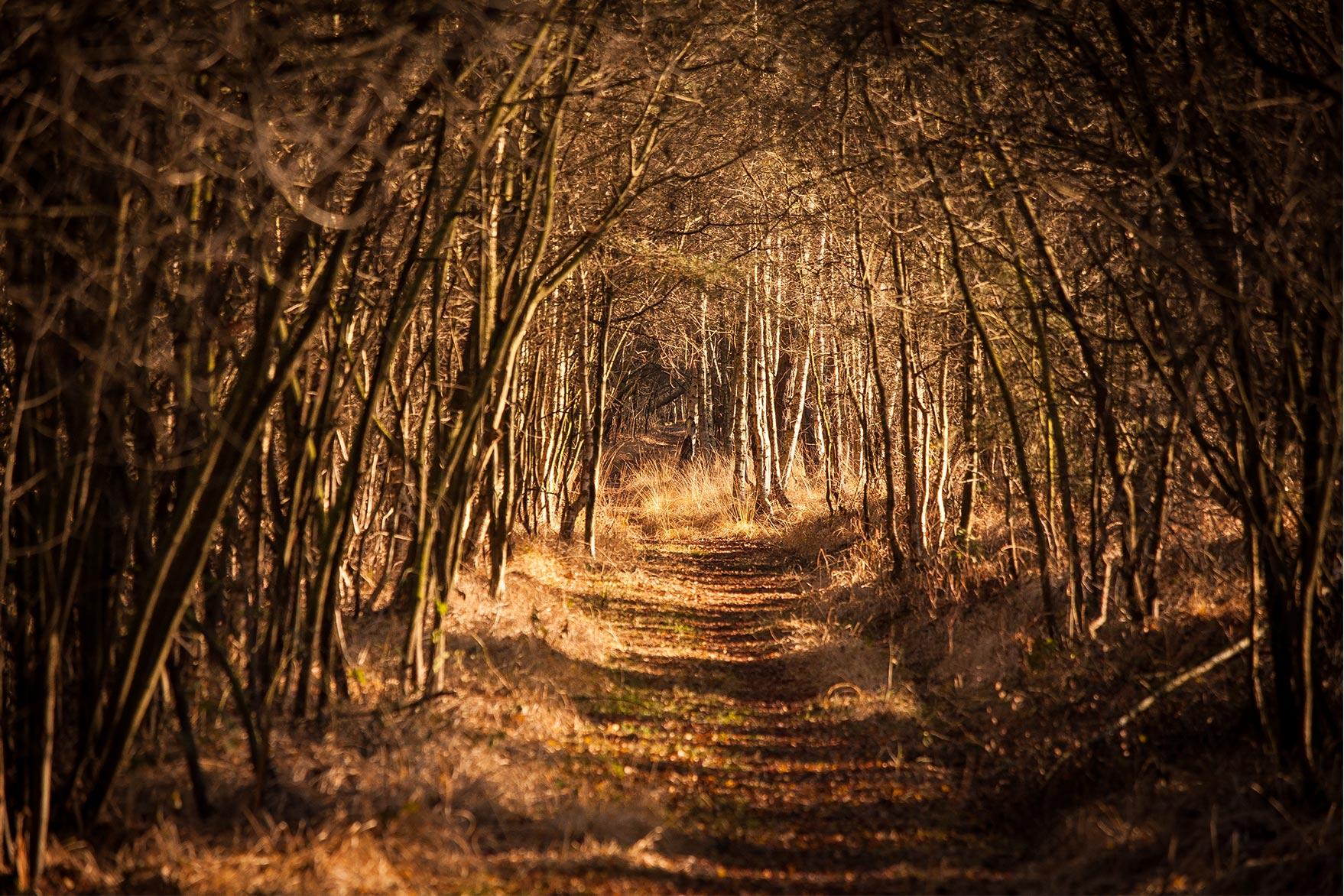 Winter im Resser Moor